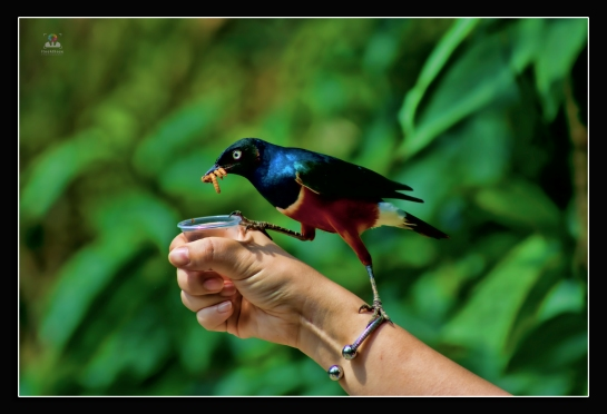 """I don't feed the birds because they need me; I feed the birds because I need them."" ― Kathi Hutton"